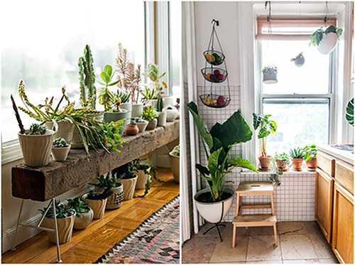 Выращивайте комнатные растения